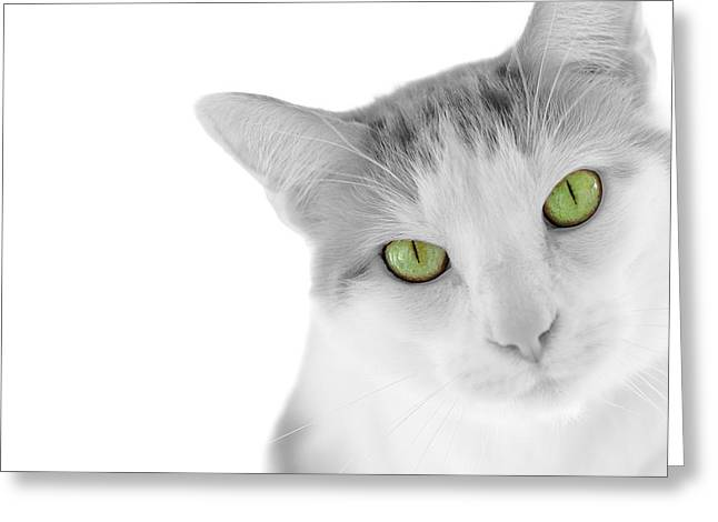Cat Face Greeting Cards - The Curious Cat Greeting Card by Jim Hughes