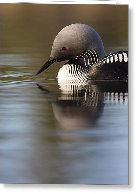 The Curve Of A Neck Greeting Card by Tim Grams