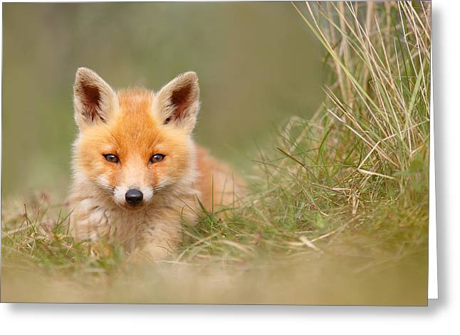 Red Fox Pup Greeting Cards - The Cute Kit Greeting Card by Roeselien Raimond