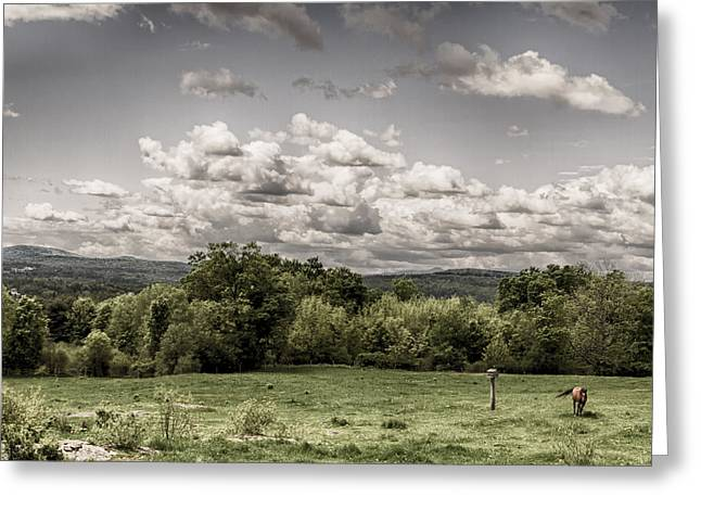 Green Pasture Greeting Cards - The Dale II Greeting Card by Nathan Larson