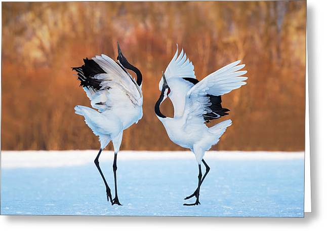 The Dance Of Love Greeting Card by C. Mei