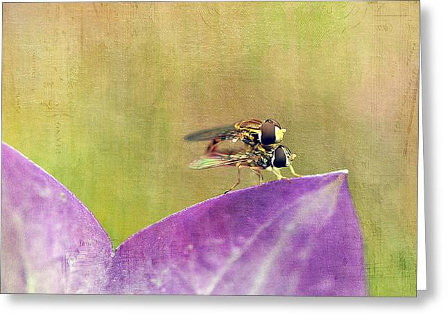 Maine Meadow Greeting Cards - The Dance of the Hoverfly Greeting Card by Cindi Ressler