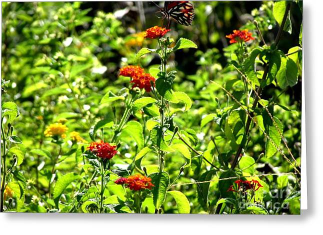 Nature Greeting Cards - The Dancing Butterfly Greeting Card by Gardening Perfection