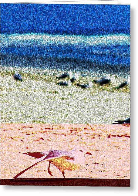 The Dancing Seagull Greeting Card by Bob Pardue