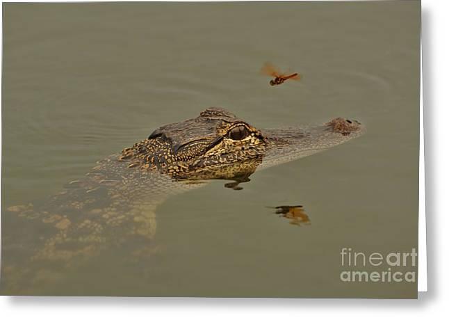 Lynda Dawson-youngclaus Photographer Greeting Cards - The Daring Dragonfly Greeting Card by Lynda Dawson-Youngclaus