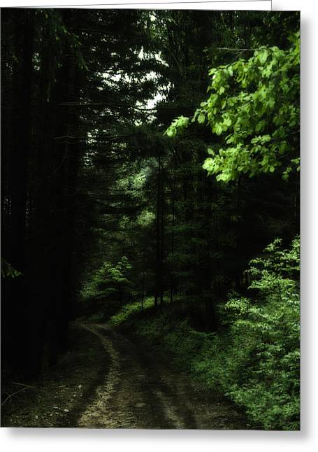 Deep Fears Greeting Cards - The Dark Forest Greeting Card by Nomad Art And  Design