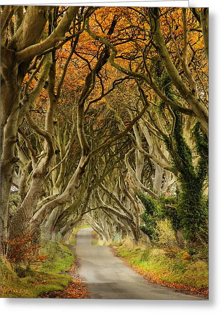 The Dark Hedges Greeting Cards - The Dark Hedges 2 Greeting Card by Frank  Koenig