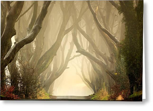The Dark Hedges 2011 Greeting Card by Pawel Klarecki
