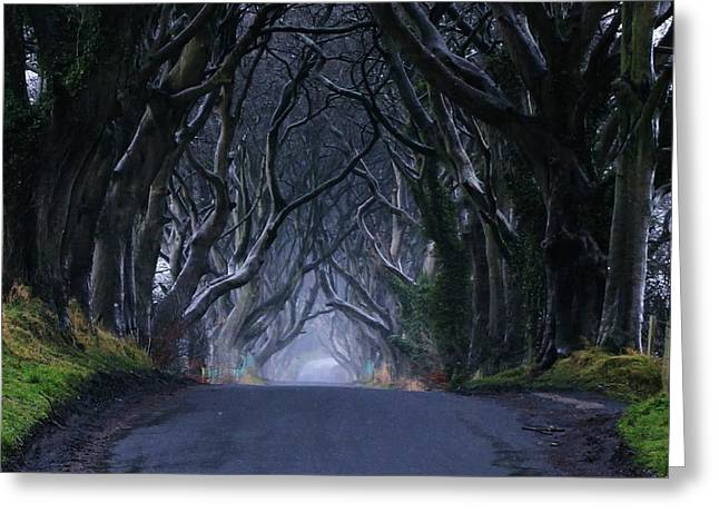 Ballymoney Greeting Cards - The Dark Hedges Greeting Card by Anne Kelly