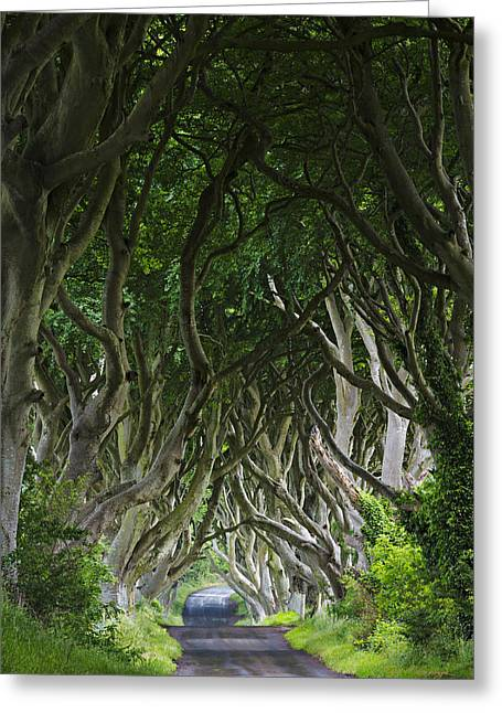 Ballymoney Greeting Cards - The Dark Hedges Greeting Card by Dan McGeorge
