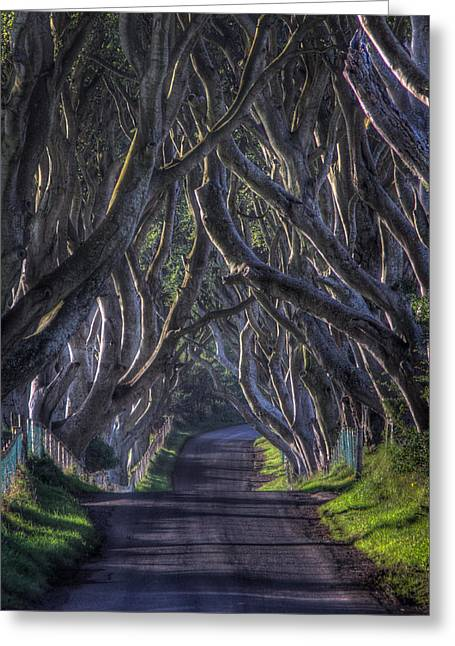 Ballymoney Greeting Cards - The Dark Hedges Greeting Card by Daz Brown Photography