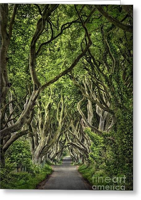 Mystic Photographs Greeting Cards - The Dark Hedges Greeting Card by Evelina Kremsdorf