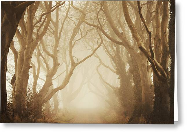 The Dark Hedges Greeting Cards - The Dark Hedges Greeting Card by Maggy Morrissey
