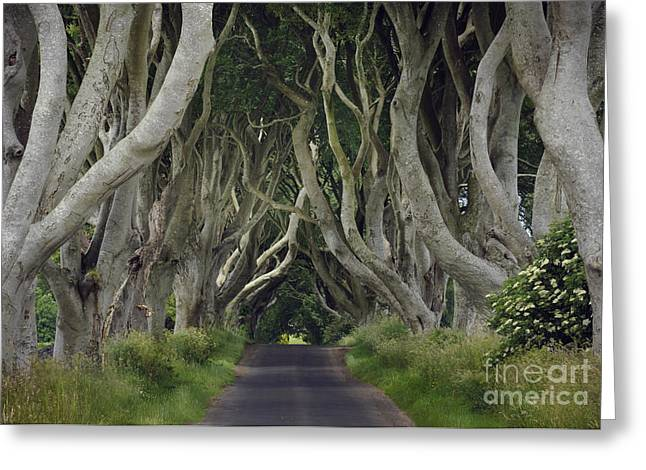 The Dark Hedges Greeting Cards - The Dark Hedges, Northern Ireland Greeting Card by John Shaw