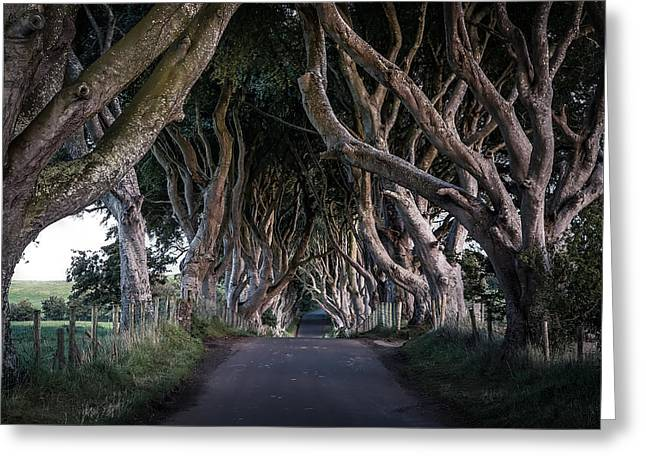 Ballymoney Greeting Cards - The Dark Hedges of County Antrim Greeting Card by Nick Jackson