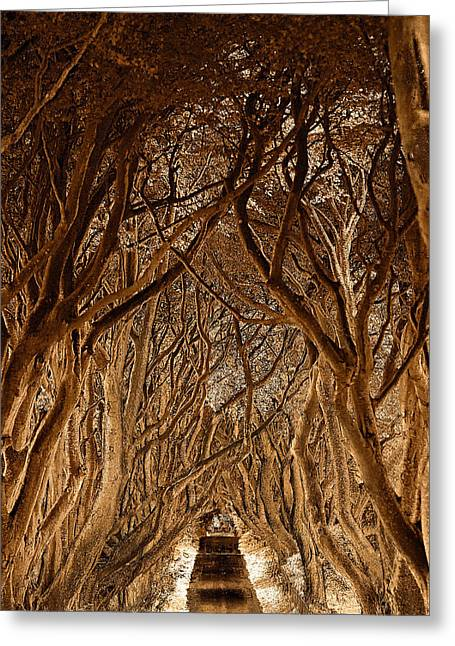 The Dark Hedges Greeting Card by Pierre  TORNERO