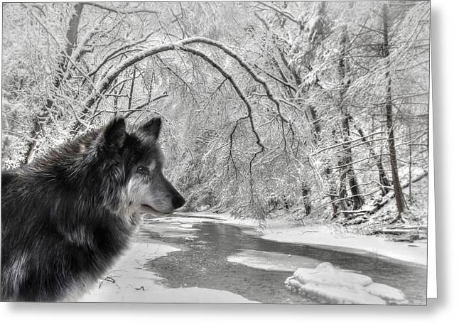 Wolf Creek Greeting Cards - The Dark Wolf Greeting Card by Lori Deiter