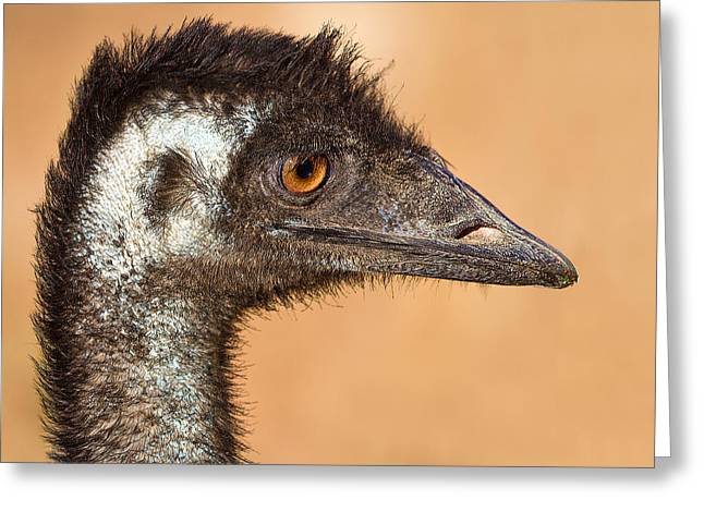 For Sale Greeting Cards - The day I met an Emu Greeting Card by Mr Bennett Kent