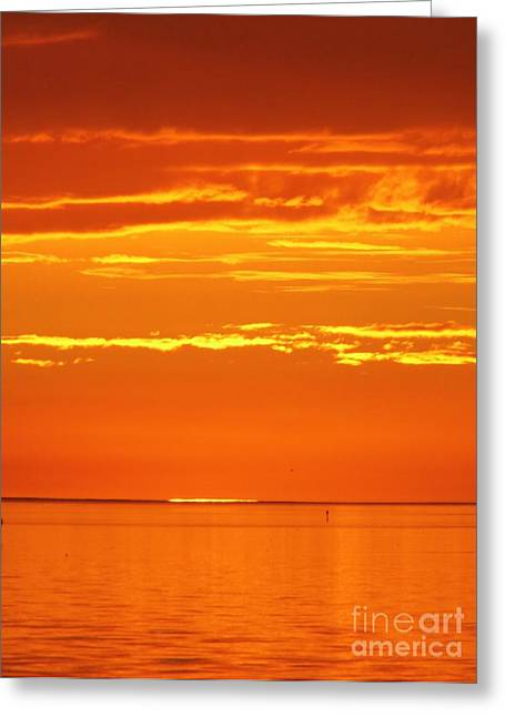 Cedar Key Greeting Cards - The Day Is Done Greeting Card by D Hackett