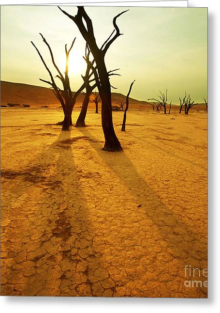 Johann Baptist Hofner Pyrography Greeting Cards - The Dead Valley Greeting Card by Boon Mee
