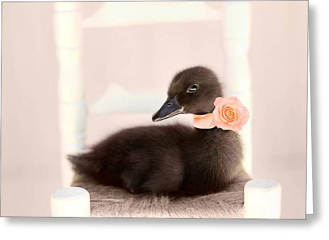 Baby Ducks Greeting Cards - The Debutante Greeting Card by Amy Tyler