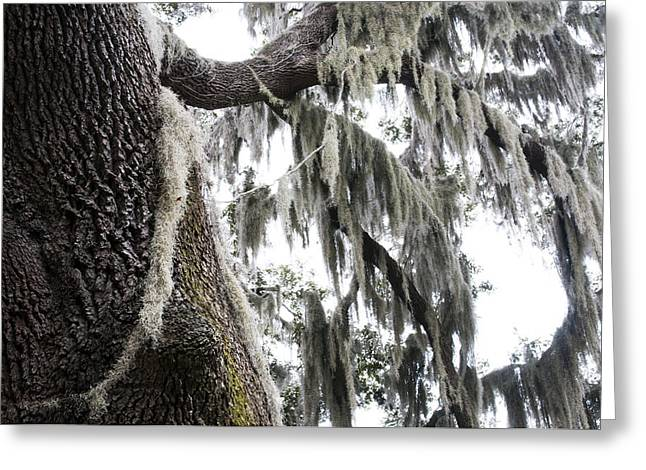 Epiphyte Greeting Cards - The Deep South Greeting Card by Kenneth Albin