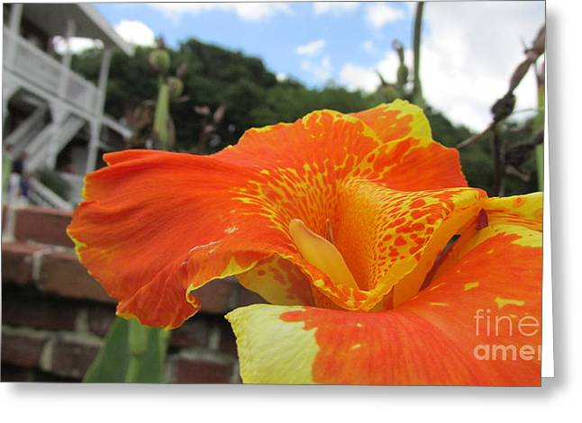Canna Greeting Cards - The Delicate Canna Lily Greeting Card by Sandra Morua