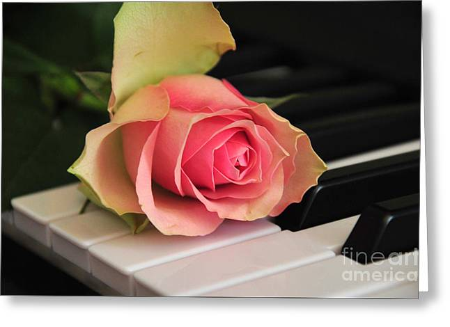 The Delicate Rose Greeting Card by Randi Grace Nilsberg
