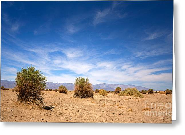 Arid Landscapes Greeting Cards - The Devils Cornfield Greeting Card by Jane Rix