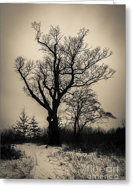 Weird New Jersey Greeting Cards - The Devils Tree Greeting Card by Jeffrey Miklush
