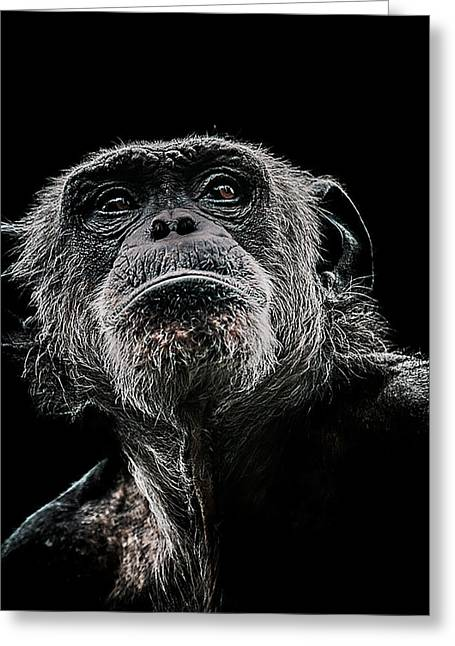 Chimpanzee Greeting Cards - The Dictator Greeting Card by Paul Neville