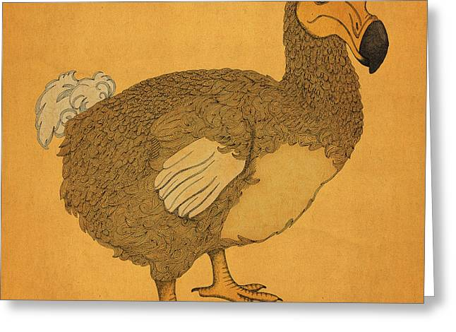 Dodo Greeting Cards - The Dodo Greeting Card by Meg Shearer