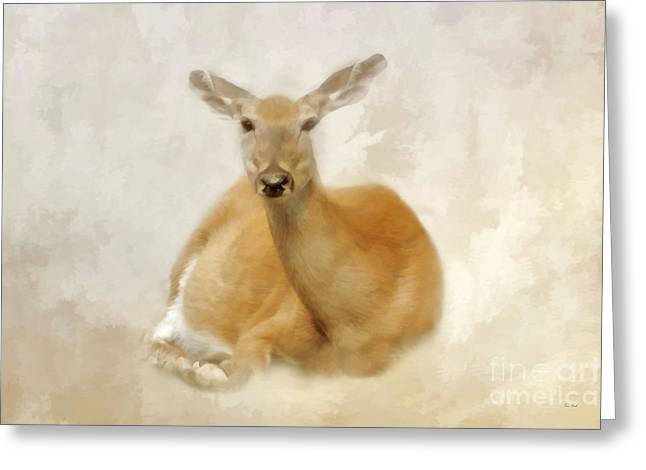 Thomas York Greeting Cards - The Doe Greeting Card by Tom York Images