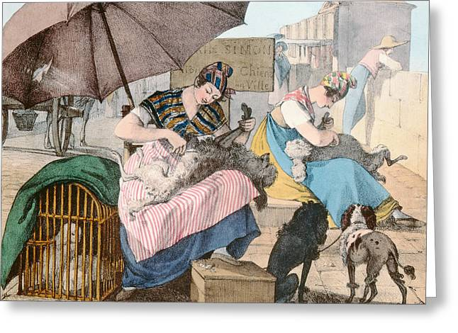The Dog Groomers Greeting Card by John James Chalon