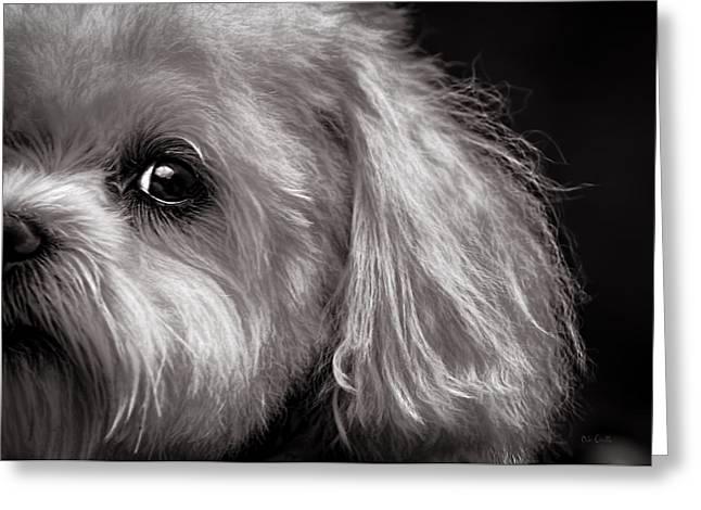 The Dog Next Door Greeting Card by Bob Orsillo
