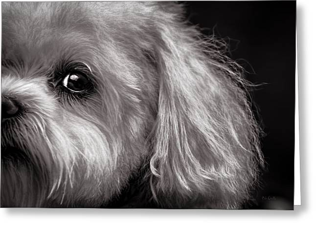 Cute Animal Portraits Greeting Cards - The Dog Next Door Greeting Card by Bob Orsillo