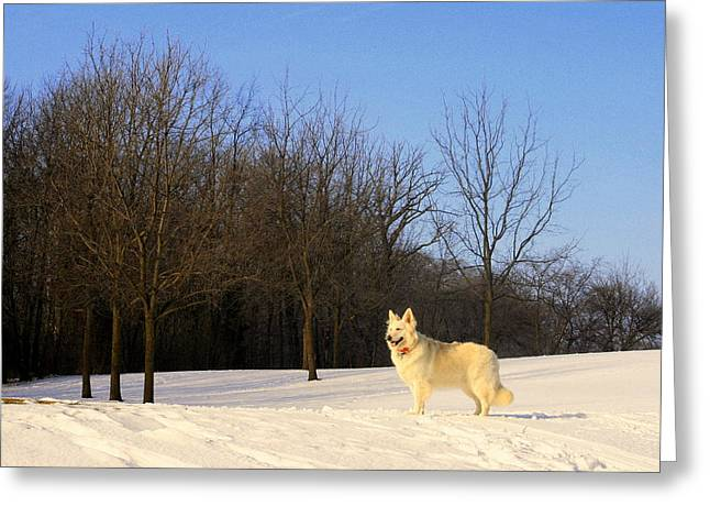 The Dog On The Hill Greeting Card by Kay Novy