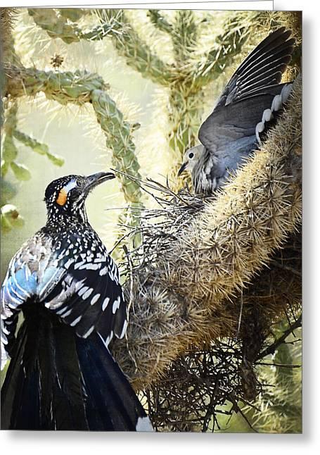 Roadrunner Greeting Cards - The Dove vs. the Roadrunner Greeting Card by Saija  Lehtonen