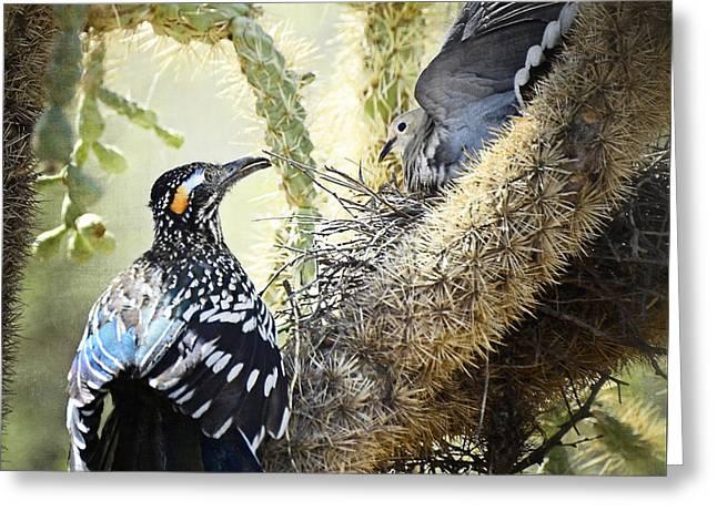 The Dove Vs. The Roadrunner Greeting Card by Saija  Lehtonen