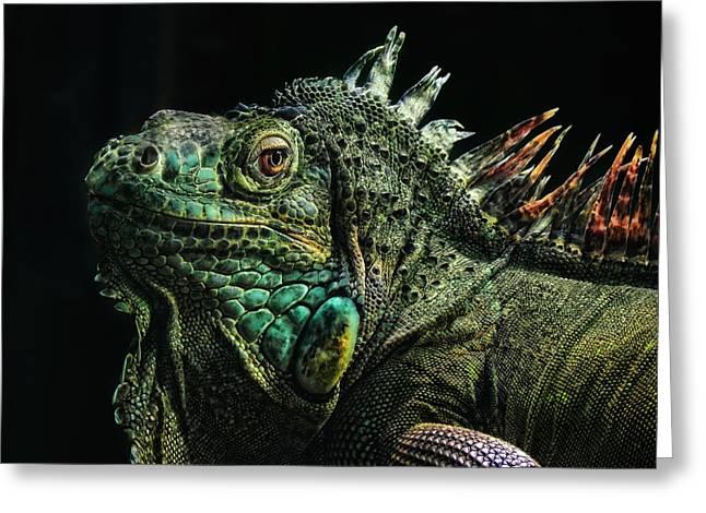 Iguanas Greeting Cards - The Dragon Greeting Card by Joachim G Pinkawa