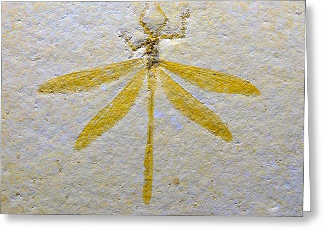 Extinction Of Species Greeting Cards - The Dragonfly Greeting Card by Mike Greco