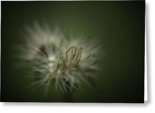 Dreamy Photographs Greeting Cards - The Dream Within Greeting Card by Shane Holsclaw