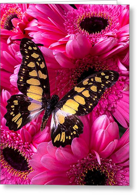 Yellow Butterfly Greeting Cards - The Dreamer Greeting Card by Garry Gay