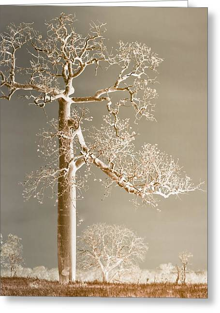 Holly Kempe Greeting Cards - The Dreaming Tree Greeting Card by Holly Kempe