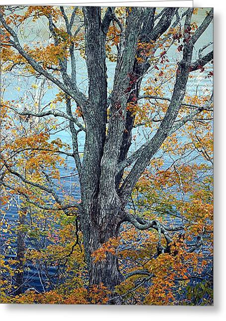 Lake Tapestries - Textiles Greeting Cards - The Dress of Autumn - Lake Cumberland KY Greeting Card by Thia Stover