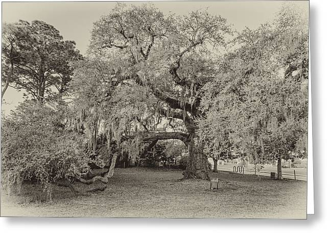 The Dueling Oak - A Place For Dying Bw Greeting Card by Steve Harrington