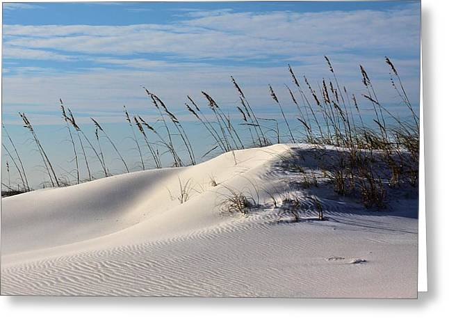 Florida Panhandle Greeting Cards - The Dunes of Destin Greeting Card by JC Findley