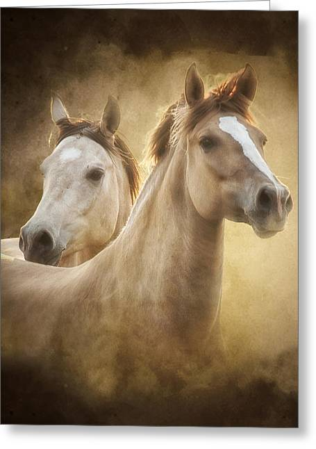 Buckskin Horse Greeting Cards - The Duns Greeting Card by Ron  McGinnis