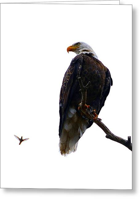 Rare Moments Greeting Cards - The Eagle and The Hummingbird Greeting Card by Tranquil Light  Photography