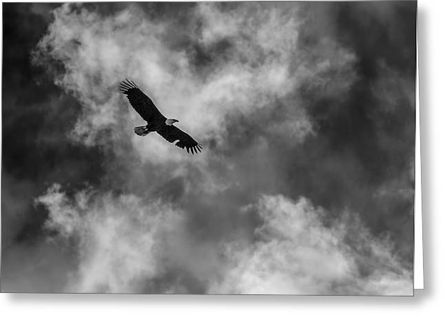 Eagle In Clouds Greeting Cards - The Eagle BW Greeting Card by Ernie Echols